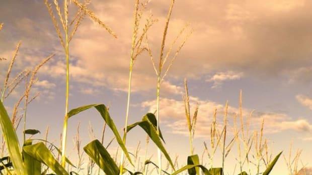 cornfarm-ccflcr-ReinventedWheel1