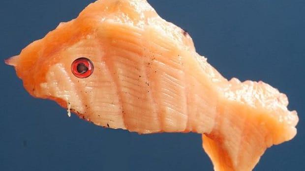 SalmonFish