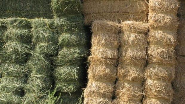 haystack-ccflcr-stevendamron1
