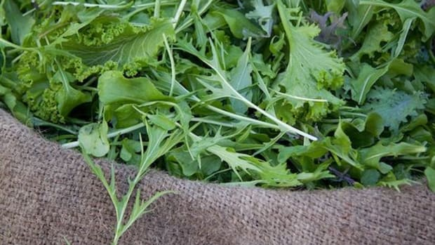 salad-greens-ccflcr-timsackton