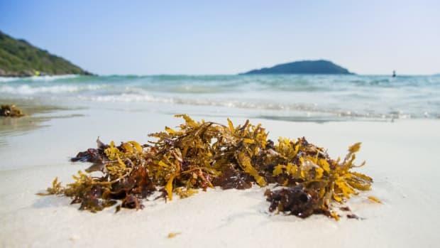 benefits of seaweed to your garden