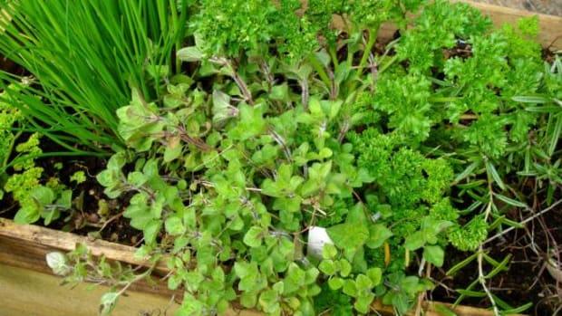 herbs-ccflcr-christianguthier