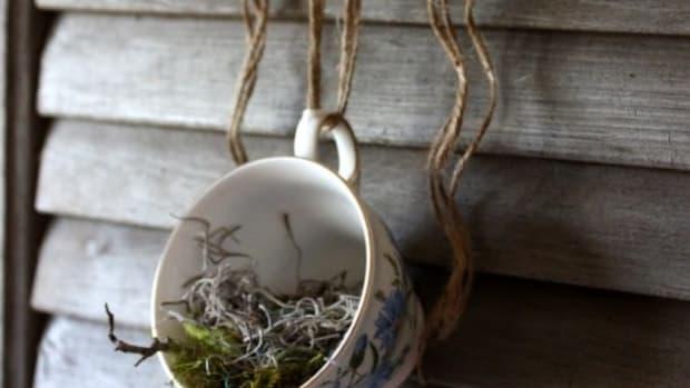 cupplanter-ccflcr-lilfishstudios
