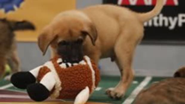 puppybowl1