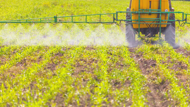 FDA Data Finds High Levels of Glyphosate in All Foods Tested 'Except Broccoli'