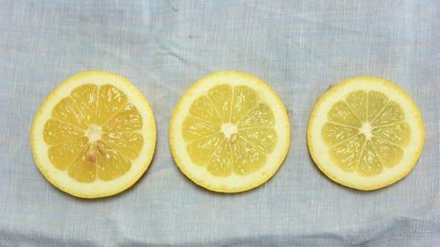 lemonslices-ccflcr-libbyandnicki
