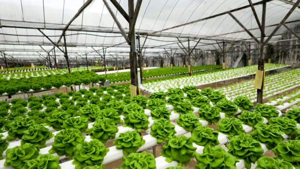 Hydroponic Farming Startup Wants to Build a Vertical Farm in Every Major City Worldwide
