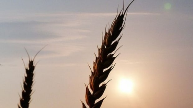 corn-ccflcr-AlicePopkorn