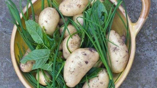 potatomix-ccflcr-craiglea