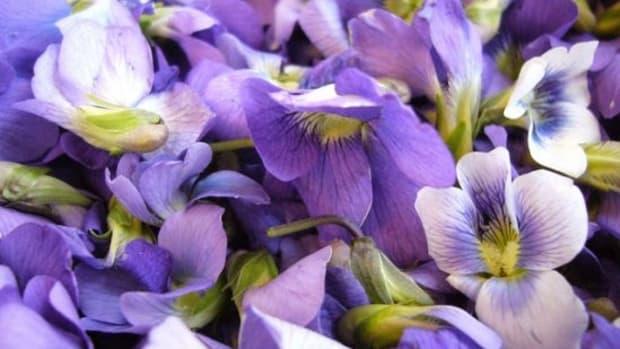 violets-ccflcr-ktries