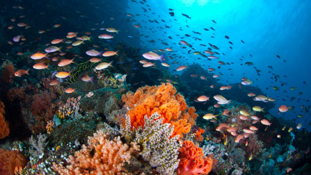 Marine Species 'Can't Adapt' to Climate Change and Overfishing, Study Finds