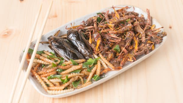 Bug Appetit! 7 Scary-Good Bug Dishes to Get Past Your Fear of Eating Insects