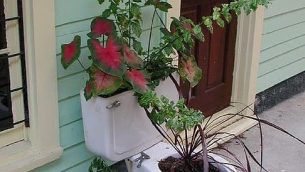 toiletplanter-ccflcr-Editor-B