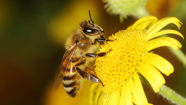 Cascadian Farm to Plant 100,000 Acres of Pollinator Habitat by 2020