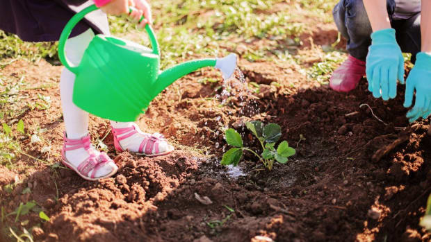 Kids love easy-to-grow plants.