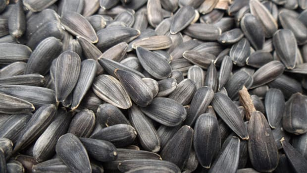 Close-up of sunflower seeds