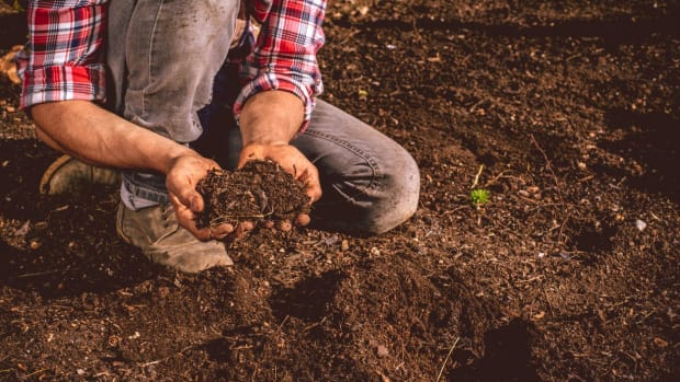 New Study Shows Organic Soil Has a 26 Percent Higher Potential for Carbon Storage