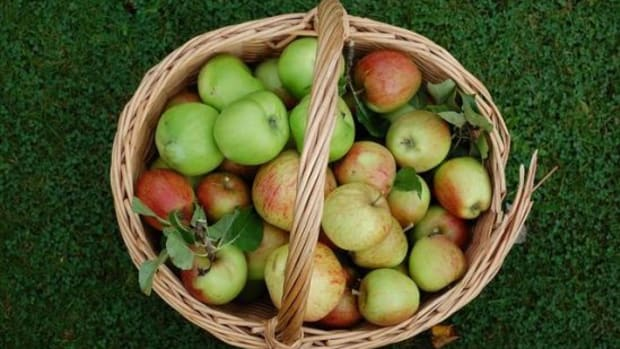 Savory-Ways-to-Use-Apples-in-Autumn-Entrees_ccflcr_Steenbergs_11.13.12