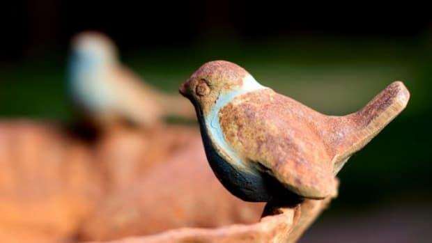 birdbath-ccflcr-JohnONolan