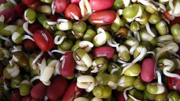 sproutedbeans-ccflcr-shanlung