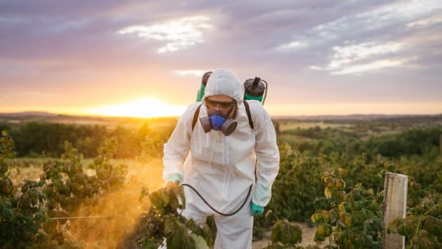 New Study May Redeem Monsanto's Roundup: No Cancer Link to Glyphosate Found