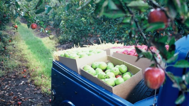 Progressive Food Waste Bill Headed to Congress