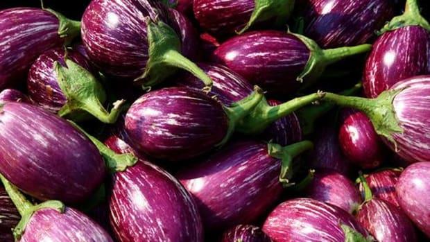 eggplant-ccflcr-muffet