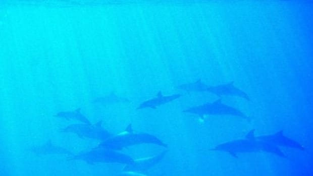 dolphins-ccflcr-jurvetson1