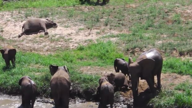 These Adorable, Rare Elephant Twins Will Make You Weepy and Happy at the Same Time [Video]