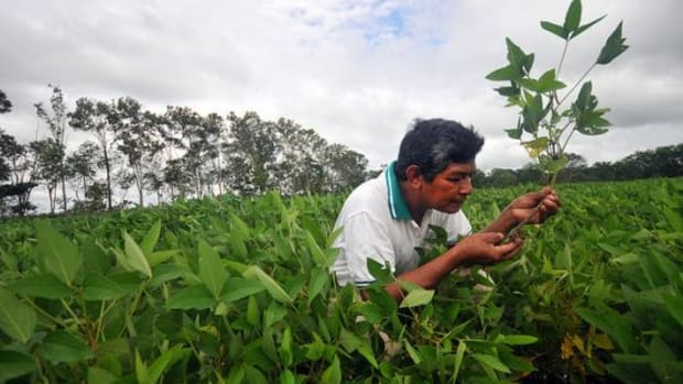soyfarmer-ccflcr-CIAT-International-Center-for-Tropical-Agriculture1