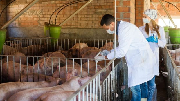 WHO Releases Official Guidelines on Use of Antibiotics in Livestock