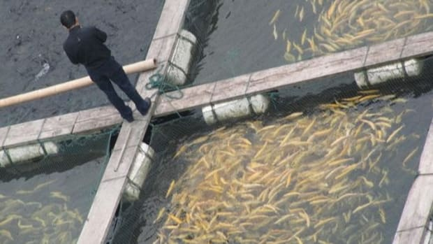 fishfarm-ccflcr-Ivan-Walsh1