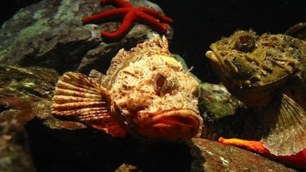 fish_ccflcr_ScubaBeer