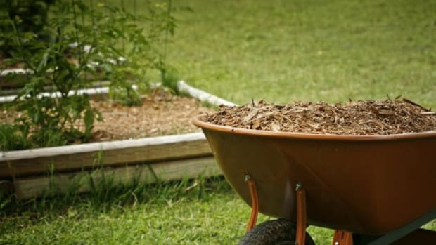 15 Things You Need to Know About Mulch