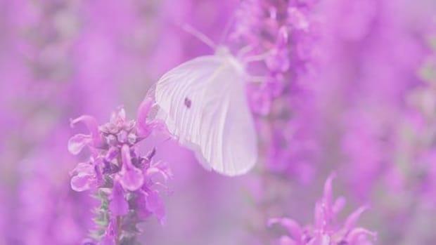 pinkpoppyphotography_lav