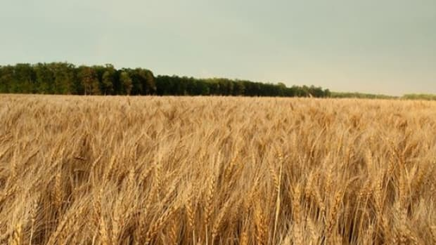 wheat-ccflcr-usfishwildlife