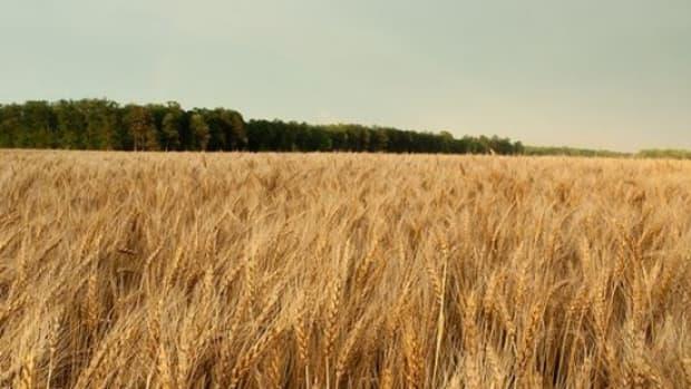 wheat-ccflcr-usfishwildlife