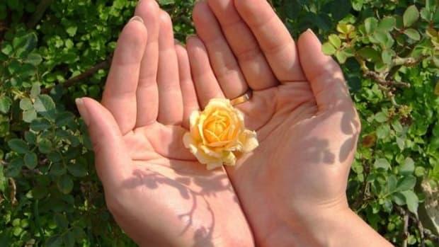 flowerhand-ccflcr-hamedsaber