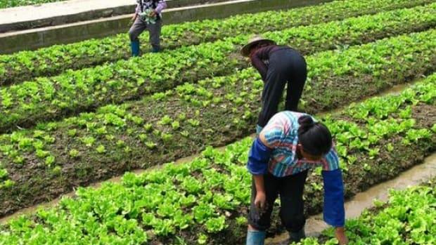 farmworkers-ccflcr-walmart