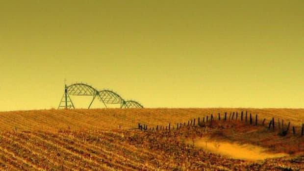 cornfield-ccflcr-Jan-Tik