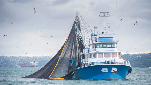 3 U.S. Senators Introduce Legislation to Ban Controversial Driftnet Fishing