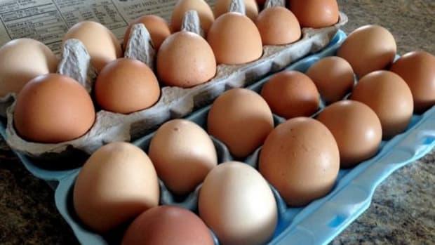 eggs-ccflcr-nemunoku