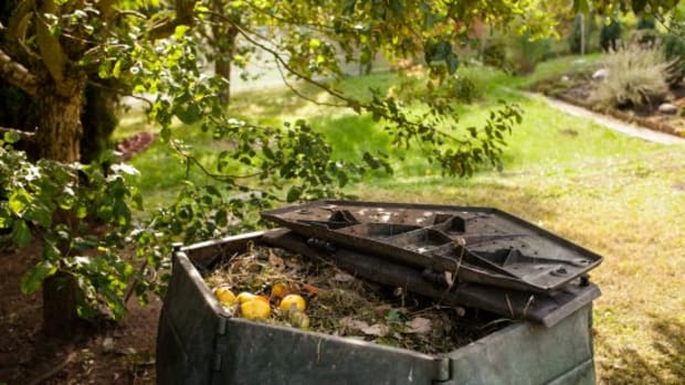 6 Tips on How to Avoid Compost Problems (BTW, You're Welcome)