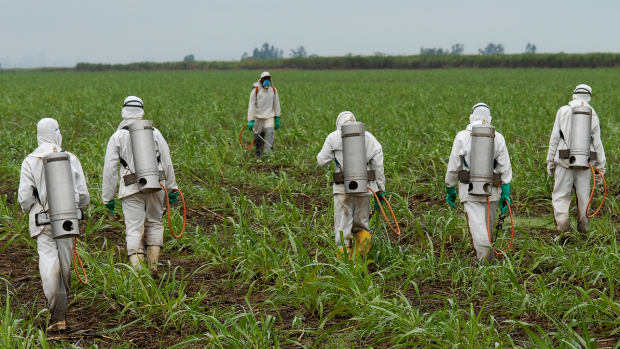 Judge to Decide if Monsanto's Glyphosate Herbicide is 'Safe'