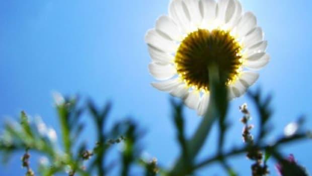 flower-ccflcr-hamed1