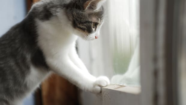 The Case for Keeping Your Cat Indoors