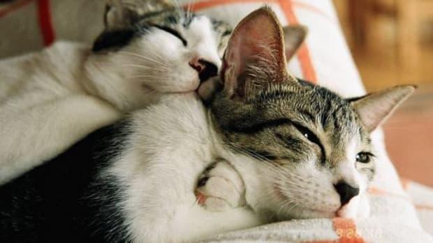 cats-ccflcr-mizuo-fiat