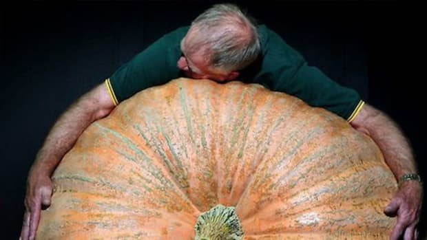 giant-pumpkin-ccflcr-Regular-Weirdo