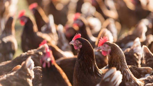 Trader Joe's Slammed with Lawsuit Alleging Cage-Free Egg Deception