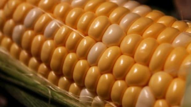 corn-ccflcr-jennuinecaptures